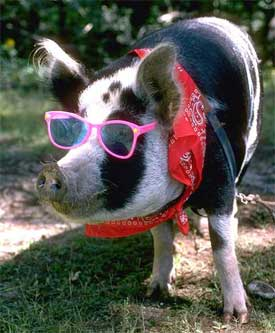 Celebrate National Pig Month